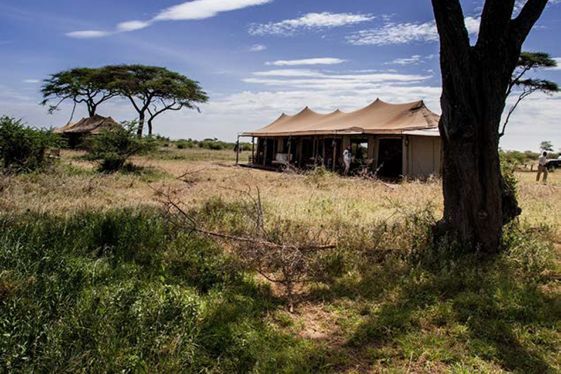 media-articles-blog-posts-wildebeest-nasikia-camps-game-drives-tours-tanzania-safaris-africa-Premier-Magazine-July-2018