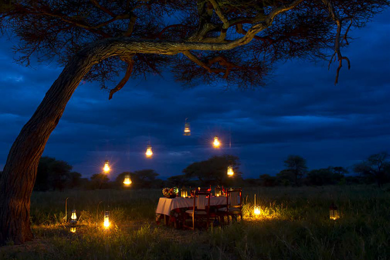 media-articles-blog-posts-wildebeest-nasikia-camps-game-drives-tours-tanzania-safaris-africa-unity-in-the-serengeti-Indwe-article