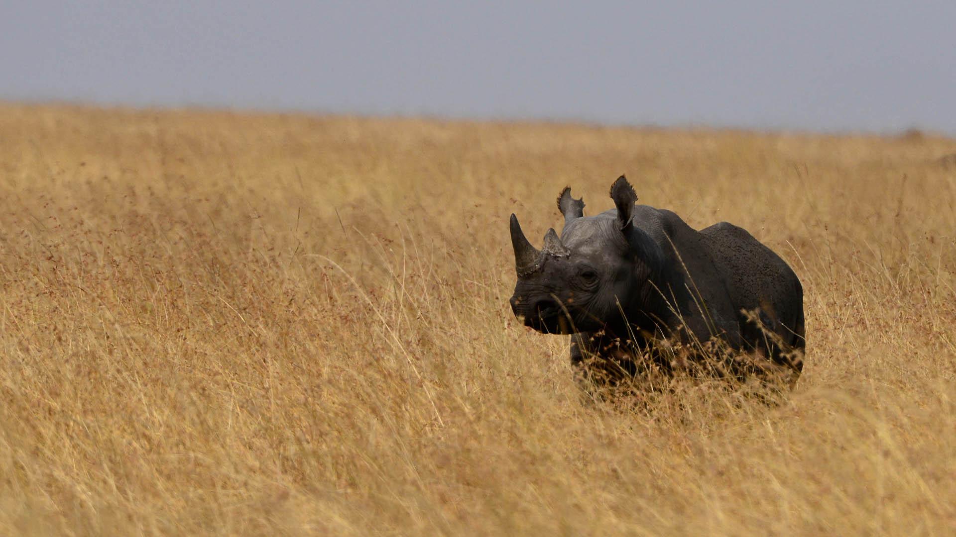 contact-Nasikia-camps-moru-rhino-serengeti-migration-destinations-nasikia-camps-tours-tanzania-safaris-africa
