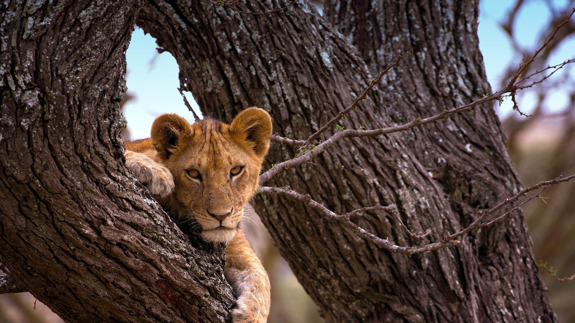 enquire-now-nasikia-camps-game-drives-tours-tanzania-safaris-africa