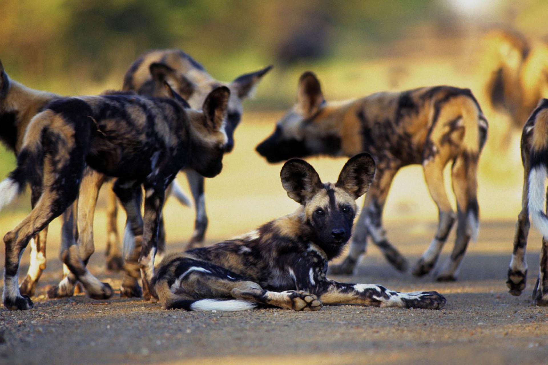 nasikia-camps-serengeti-migration-wildlife-safaris-africa