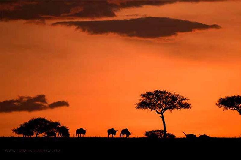media-articles-blog-posts-wildebeest-nasikia-camps-game-drives-tours-tanzania-safaris-africa-Sawubona-Article-July-2018